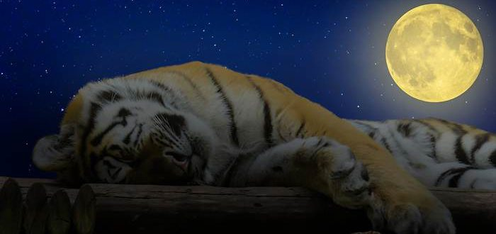 tiger 1644771 1280