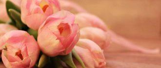 tulips 2068692 1280