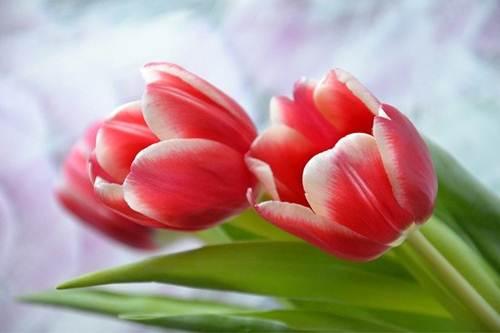 СМС поздравления с 8 марта красивые короткие