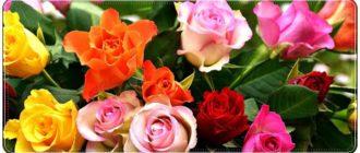 Очень красивые поздравления с днем рождения женщине в стихах