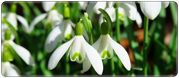 Красивые поздравления с весной в стихах и своими словами