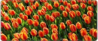 Красивые поздравления любимой жене с 8 марта в стихах и прозе